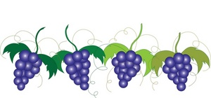 ripe_grapes_growing_on_the_grapevine_0515-0901-1416-5723_SMU